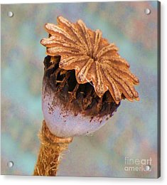 Acrylic Print featuring the photograph Poppy Seed Pod by Michele Penner