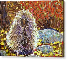 Porcupine On The Trail Acrylic Print by Harriet Peck Taylor