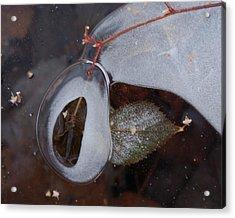 Portal Acrylic Print by Susan Capuano