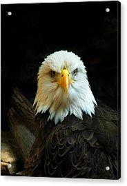Acrylic Print featuring the photograph Portrait American Bald Eagle by Randall Branham