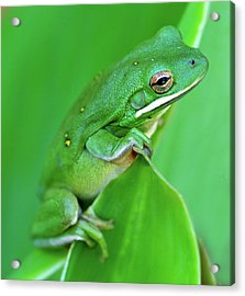 Portrait In Green Acrylic Print by Jeff R Clow