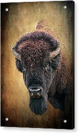 Portrait Of A Buffalo Acrylic Print