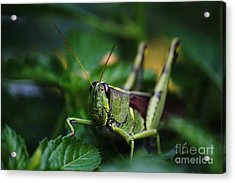 Portrait Of A Grasshopper Acrylic Print