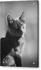 Portrait Of A Kitty Acrylic Print by Kim Henderson