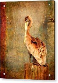 Portrait Of A Pelican Acrylic Print by Karen Lynch