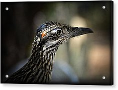 Portrait Of A Roadrunner  Acrylic Print by Saija  Lehtonen