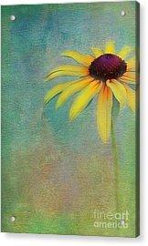 Portrait Of A Sunflower Acrylic Print by Judi Bagwell