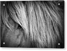 Portrait Of A Wild Horse Acrylic Print