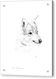 Portrait Of A Wolf Acrylic Print by Peter Edward Green