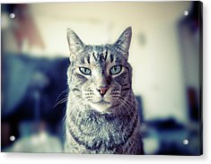 Portrait Of Cat Acrylic Print