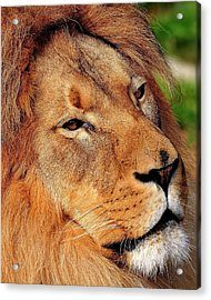 Portrait Of The King Acrylic Print