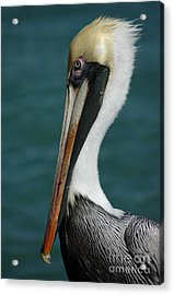 Posing For The Tourists Acrylic Print by Vivian Christopher