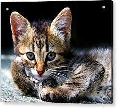 Posing Kitty Acrylic Print by Joe Myeress