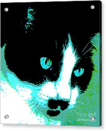 Poster Kitty Acrylic Print