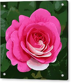 Poster Rose Acrylic Print by Jim Speirs