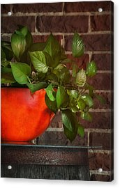 Pot Of Greens Acrylic Print by Brenda Bryant