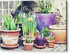 Pot Plants Acrylic Print