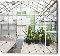 Potted Plants In A Greenhouse Acrylic Print by Thom Gourley/Flatbread Images, LLC