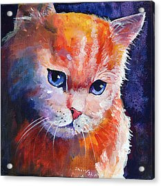 Pouting Kitty Acrylic Print by Sherry Shipley