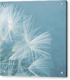 Powder Blue Acrylic Print by Sharon Lisa Clarke