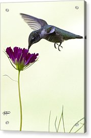 Power Of Purple Acrylic Print by Cris Hayes