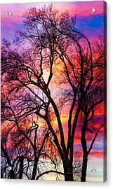 Powerful Trees Acrylic Print by James BO  Insogna