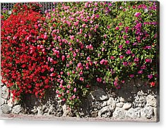 pr 356 Wallflowers Acrylic Print by Chris Berry