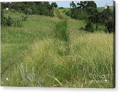 Prairie Trail In High Grass Acrylic Print by Jim Sauchyn