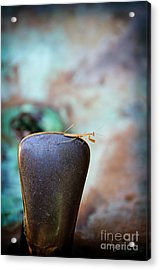 Praying For Water 1 Acrylic Print by Andee Design