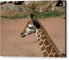 Precious Baby Giraffe Acrylic Print by Donna Parlow