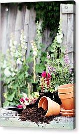 Preparing Flower Pots Acrylic Print by Stephanie Frey