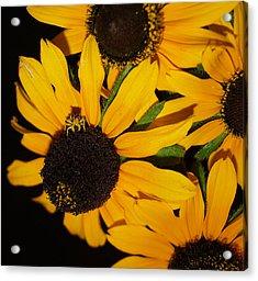 Pretend I'm A Flower Acrylic Print by Irma BACKELANT GALLERIES