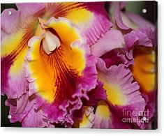 Pretty And Colorful Orchids Acrylic Print by Sabrina L Ryan