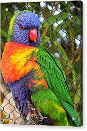 Pretty Bird Acrylic Print