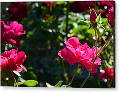 Pretty In Pink Acrylic Print by Chandra Wesson