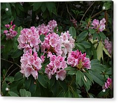 Pretty In Pink Acrylic Print by Larry Krussel