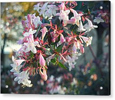 Pretty In Pink Acrylic Print by Lee Yang