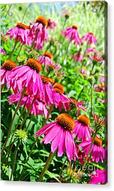Pretty In Pink Acrylic Print by Linda Mesibov