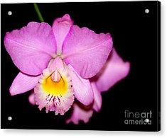 Pretty In Pink Orchid Acrylic Print by Sabrina L Ryan