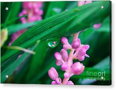 Pretty In Pink  Acrylic Print by Peggy Franz