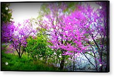 Acrylic Print featuring the photograph Pretty In Pink Spring Blossoms by Danielle  Parent