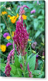 Pretty In Pink Acrylic Print by Theresa Willingham