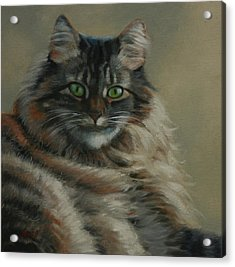 Pretty Kitty Acrylic Print by Linda Eades Blackburn