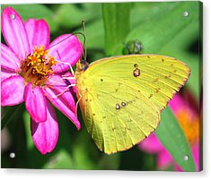 Acrylic Print featuring the photograph Pretty On Pink by Kathy Gibbons