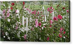 Pretty Picket Acrylic Print