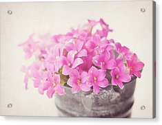 Pretty Pink Acrylic Print by SKCPhotography