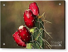 Prickley Pear Fruit Acrylic Print