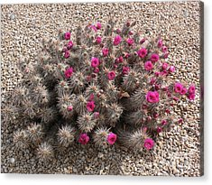 Prickly And Pretty Acrylic Print