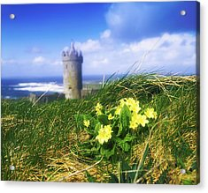 Primrose Flower In Foreground Acrylic Print by The Irish Image Collection