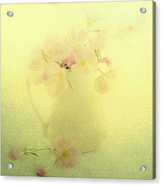 Primrose In Pastel Acrylic Print by Linde Townsend
